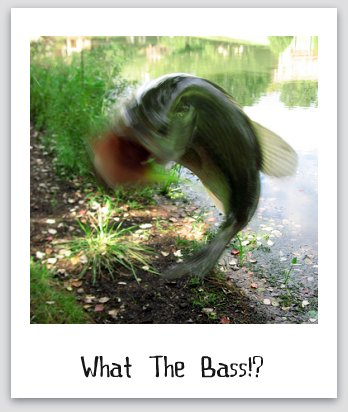 Largemouth Bass Fishing, Wicked Fish Crazy Catch Picture - photo credit by Mrs. Gemstone