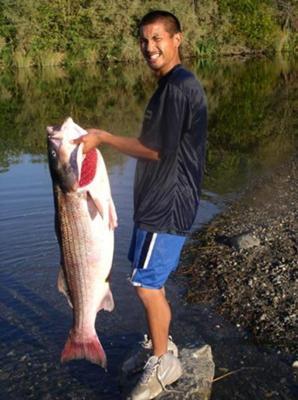 American River Striped Bass