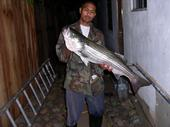 Big Fat Striped Bass