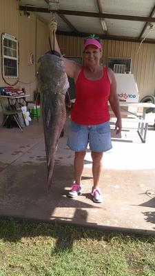 50 Pound Flat Head Catfish