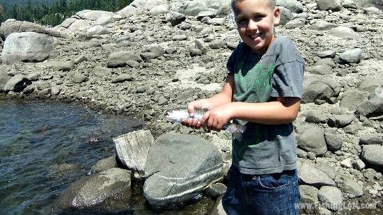 Plant Stocked Rainbow Trout at Bear River