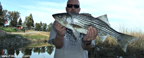 Striped Bass Fishing on the Calaveras River in Stockton, California