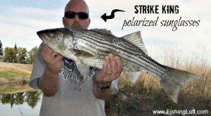 Striped Bass caught wearing Strike King Polarized Sunglasses