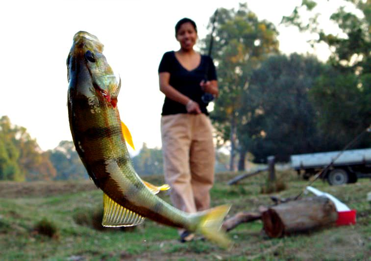 Redfin Fish caught using a worm.