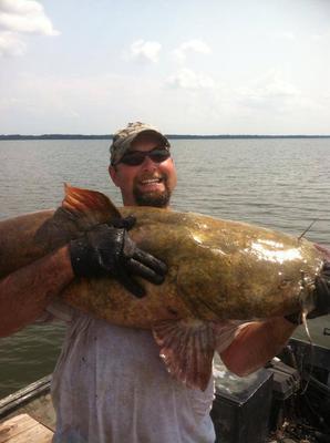 Huge catfish noodling Illinois guides