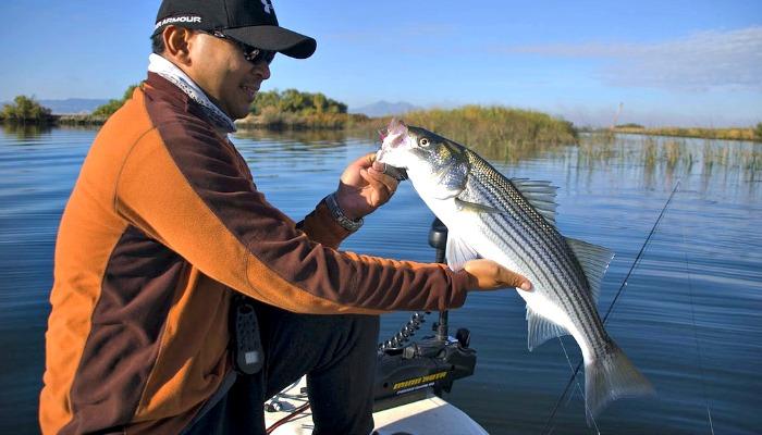 Striper Fishing Tips California Delta