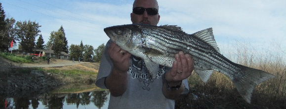 Freshwater Fishing for Striped Bass in the Calaveras River