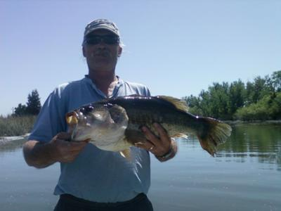 8 lb 14 oz California Delta Largemouth Bass