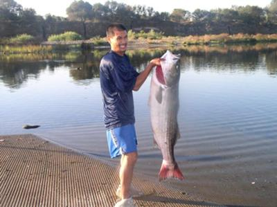Striper King On The American River with a Striped Bass Beast