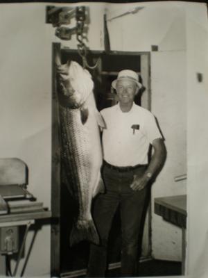 64 1/2 Pound Striped Bass