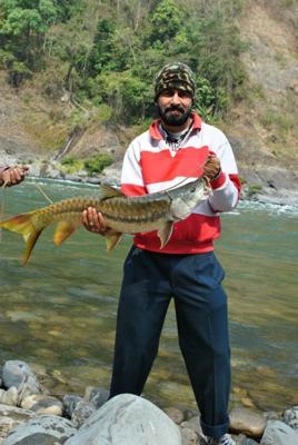 10 kg (22 pounds) Golden Masheer