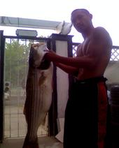 Another Monster Striped Bass