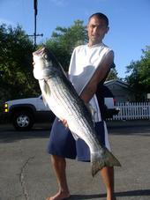 Fat Striped Bass Hawg