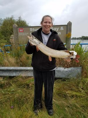 Northern Pike Picture Number 2
