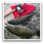 Click Here for Smallmouth Bass Pictures