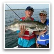Click Here for Striped Bass Pictures