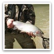 Click Here for Trout Pictures