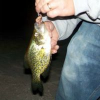 Click here to find out what Crappie Baits to use.
