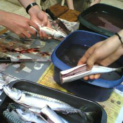Click Here to Learn How To Clean Fish