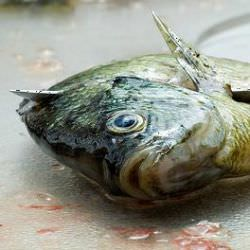 Click Here To Learn How To Fillet Fish