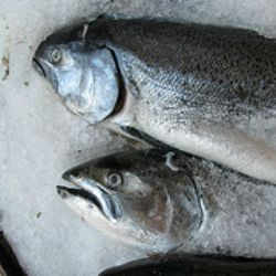 Click Here for Keeping Your Fish Fresh