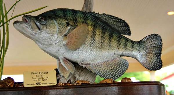 Mounted Replica of the World Record Crappie