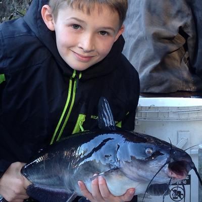 Suwannee River Catfish