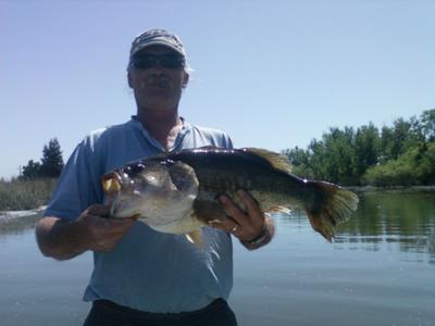 8 lb 14 oz California Delta Largemouth Bass