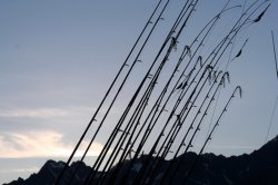 Fishing rods lined up like they're ready on a battle field for some freshwater fishing action.